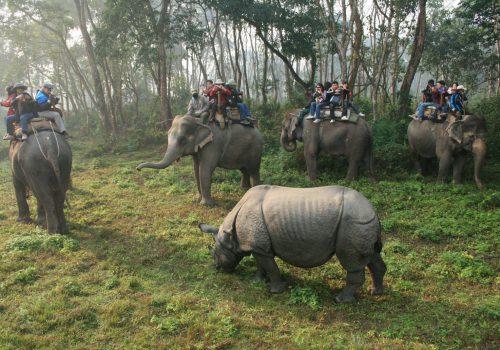 Annapurna Trek and Chitwan Jungle Safari