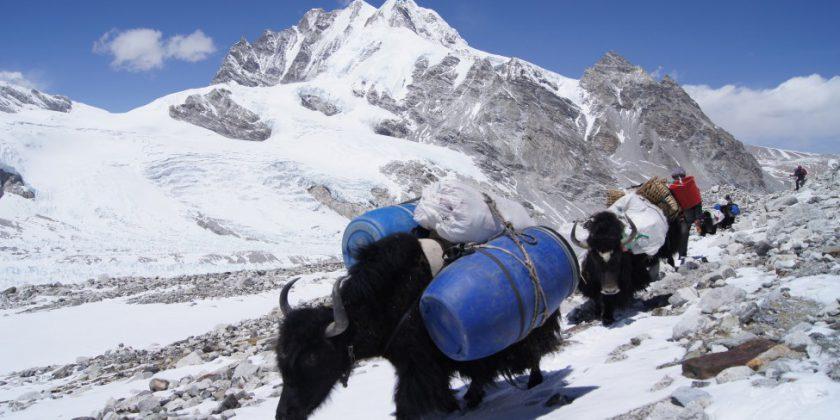Cho Oyu Expedition 2019 Spring Season & Autumn Season